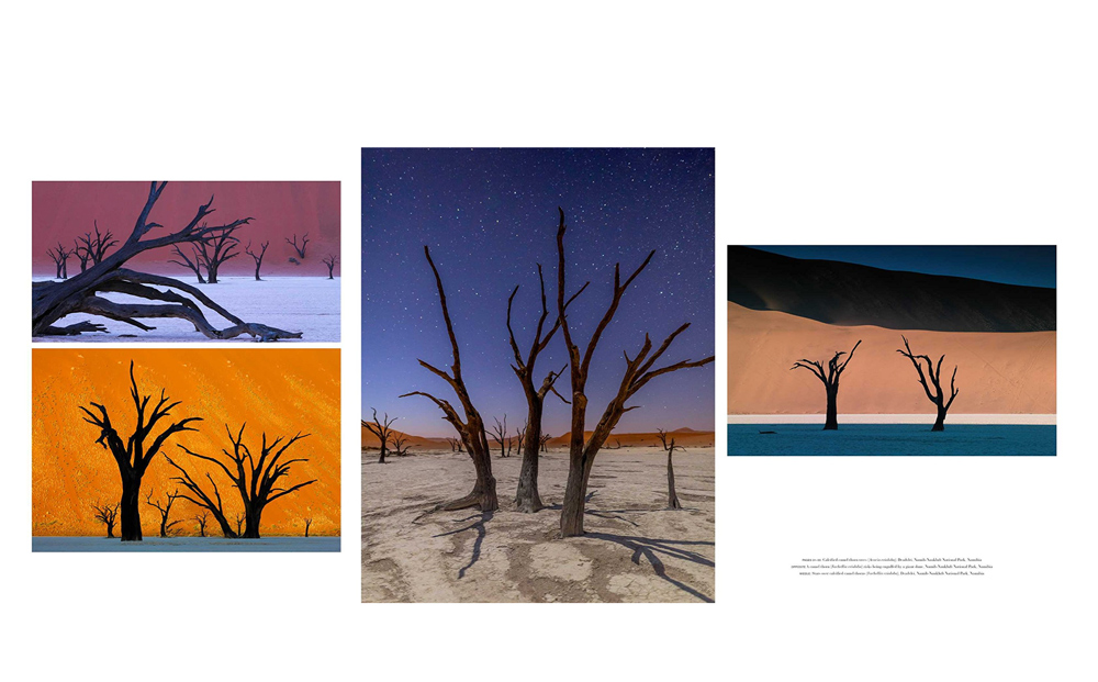 Tree Photos from Ninibia
