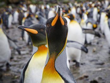 Falklands – South Georgia Expedition October 2020