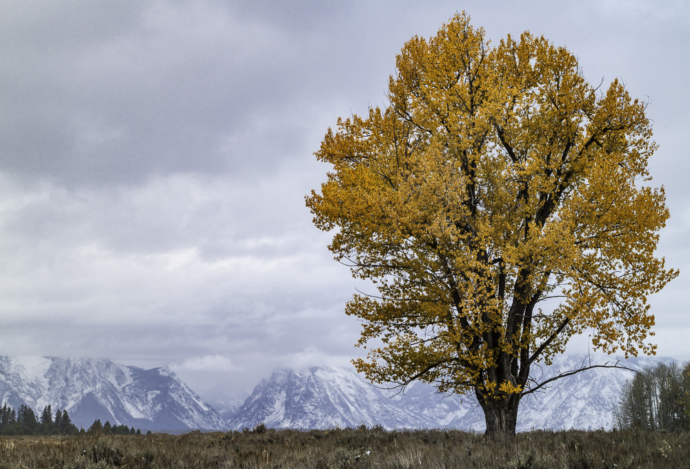 Autumn's Last Stand, Grand Teton NP