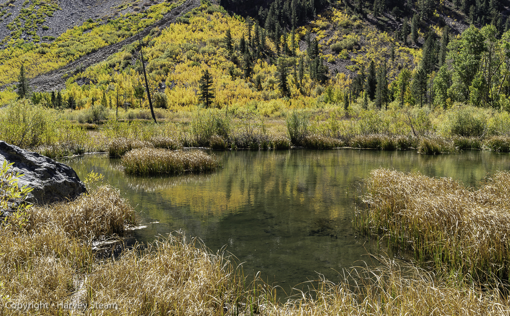 Mill Creek, Mono County, CA