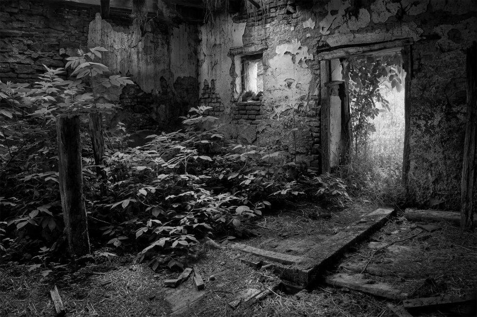 Indoor Jungle, Gherdeal, Romania