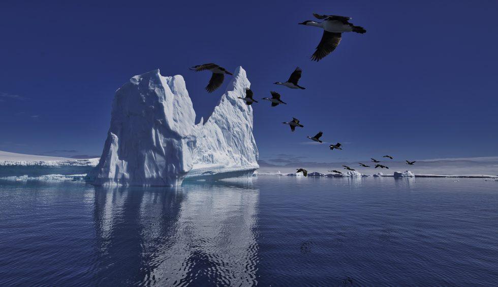 Formation In Antarctica