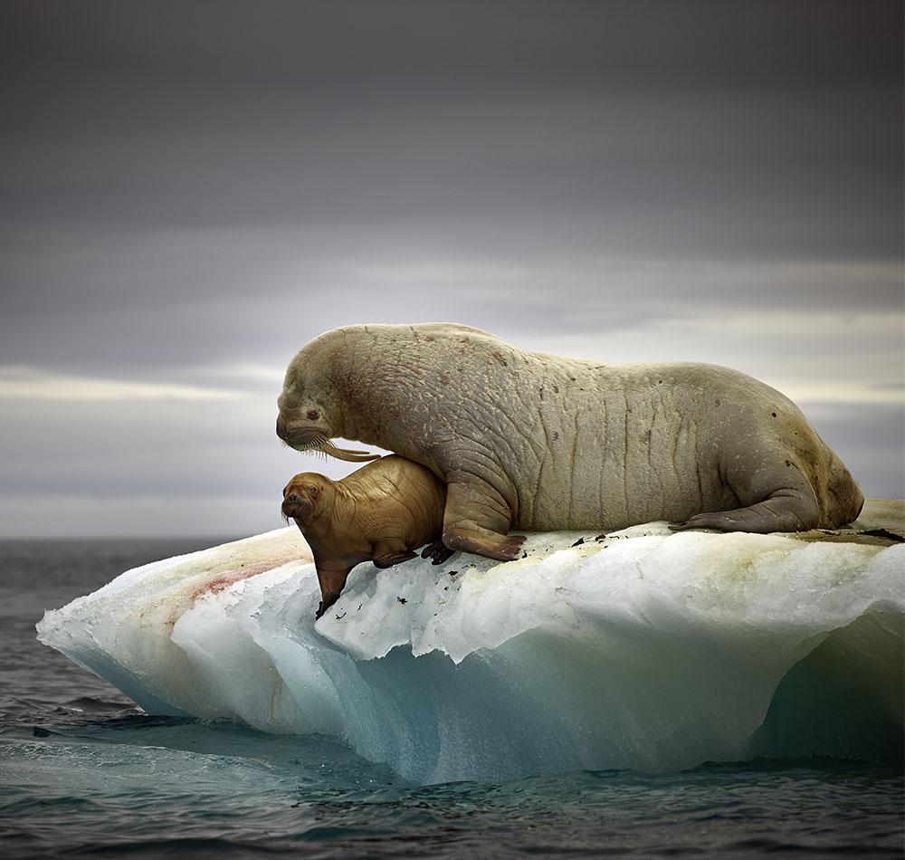 Walrus, Step 2 Adjustments