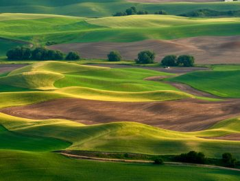 Back In The Palouse