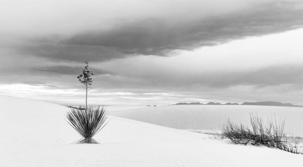 White Sands #6
