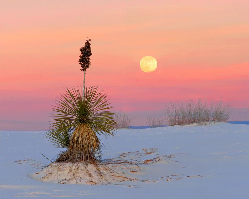 White Sands Moonrise