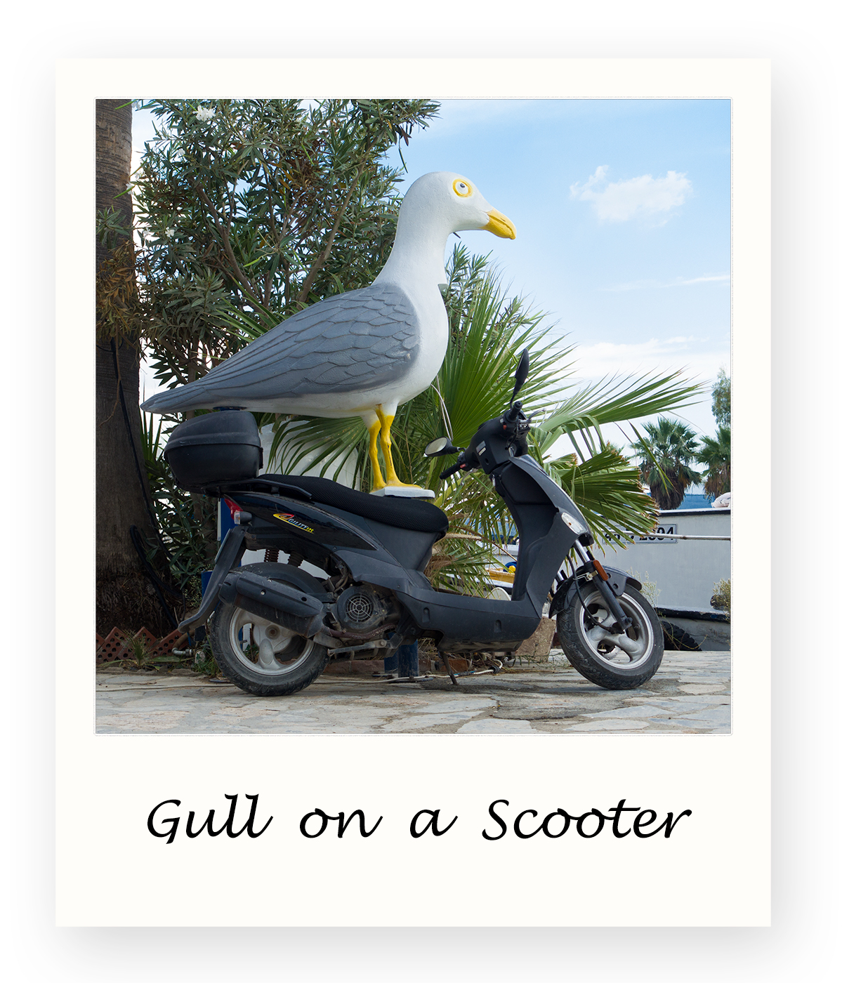 Gull-on-a-Scooter
