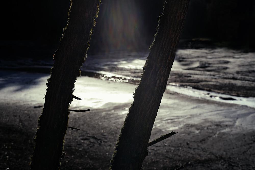 Hagerwald Stammpaar (Leica SL, Zeiss Planar 1,4/50mm)