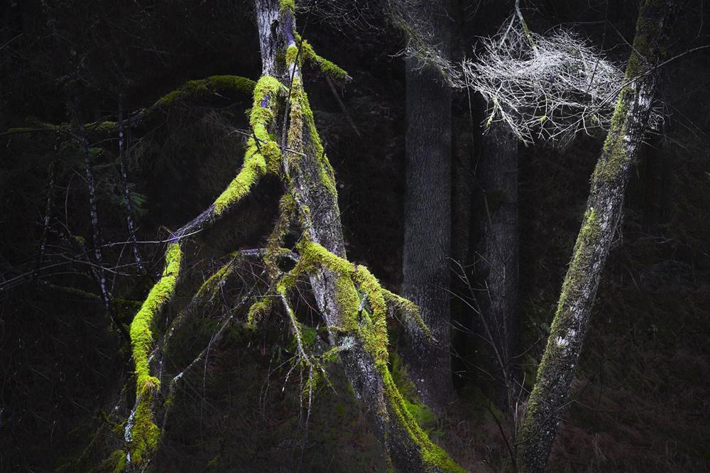 Astgespinste (Leica SL, Zeiss Sonnar 2,8/85)