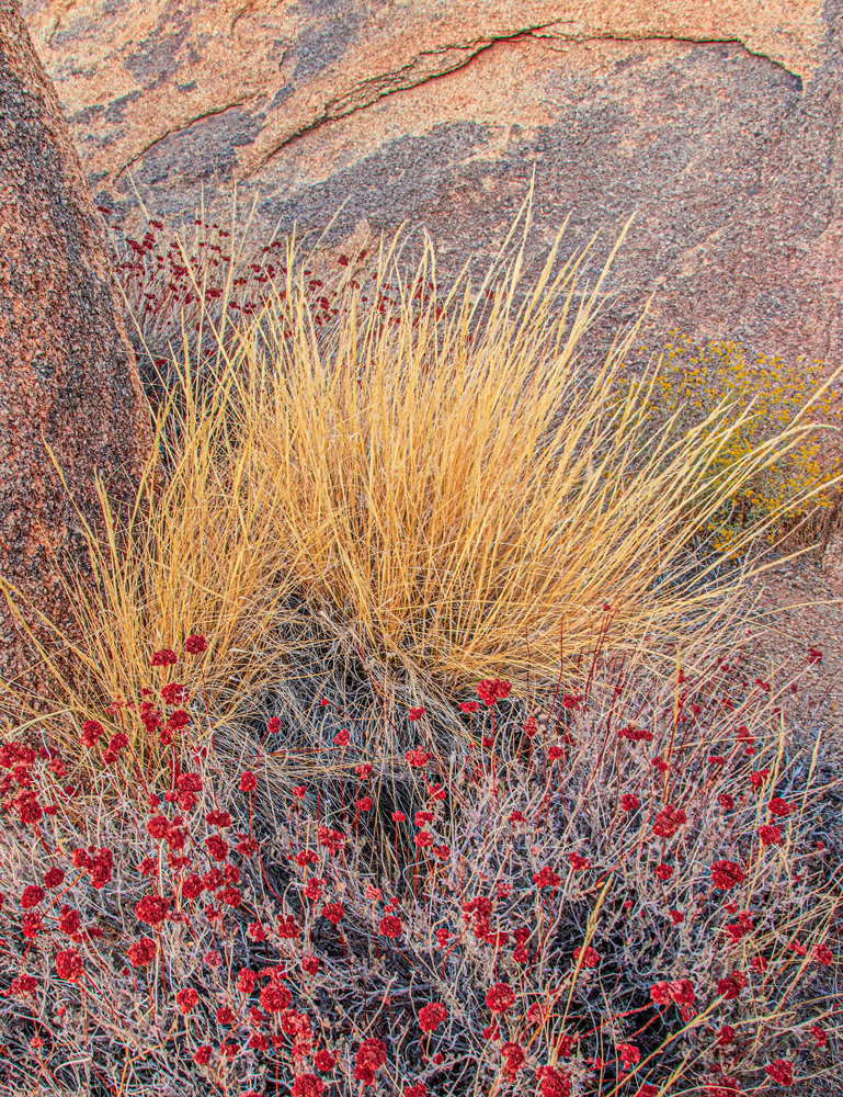 Grasses, Flowers and Boulders. Alabama Hills, California