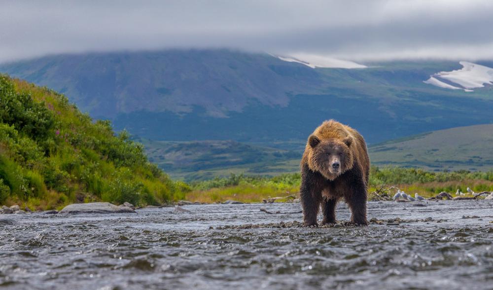 bear in storem