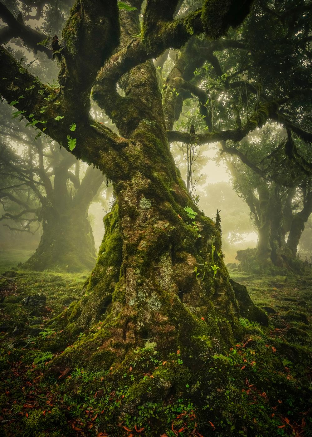 The Lone Tree Award 2019 Anke Butawitsch, Germany