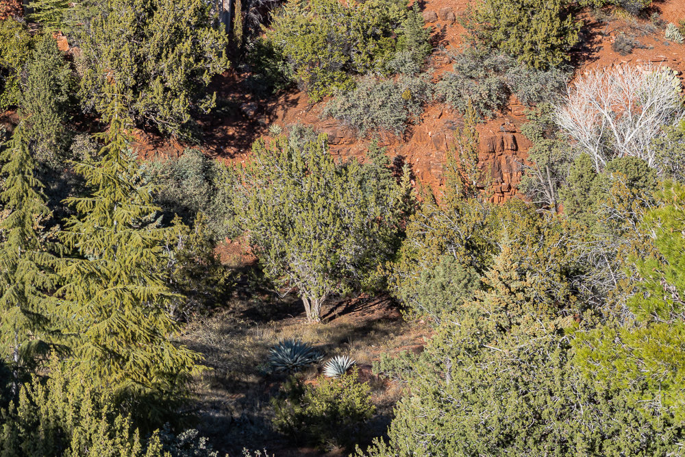 """Lower right corner of """"West Sedona"""" image at 1:1"""