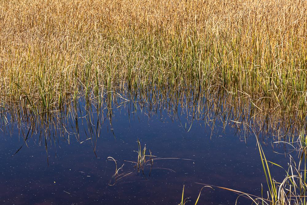 "The centralarea of ""Sedona Wetlands"" image at 1:1"