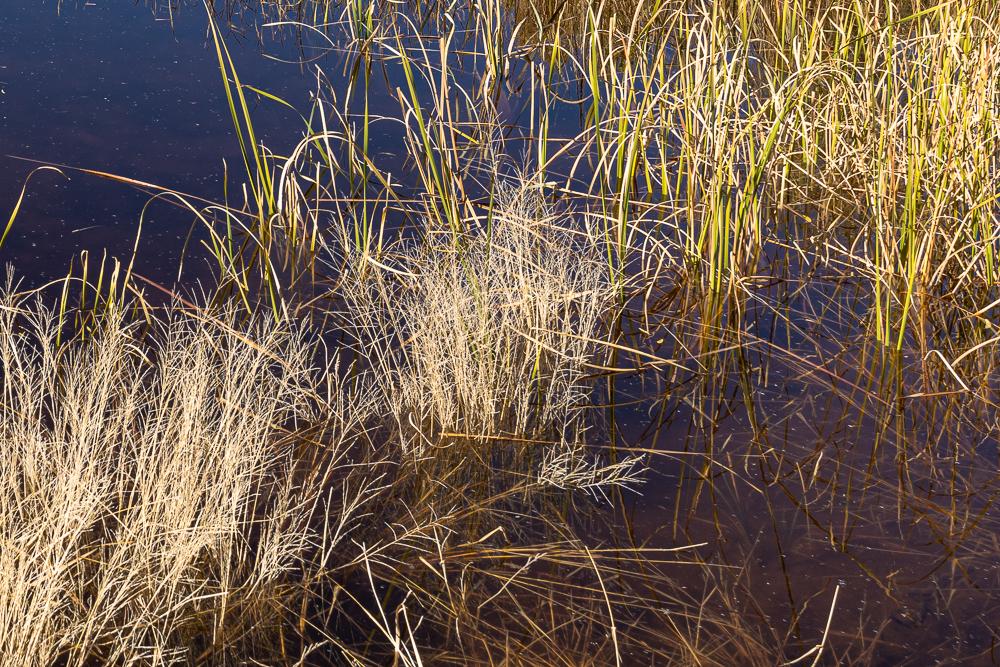 "Lower right corner of ""Sedona Wetlands"" image at 1:1"