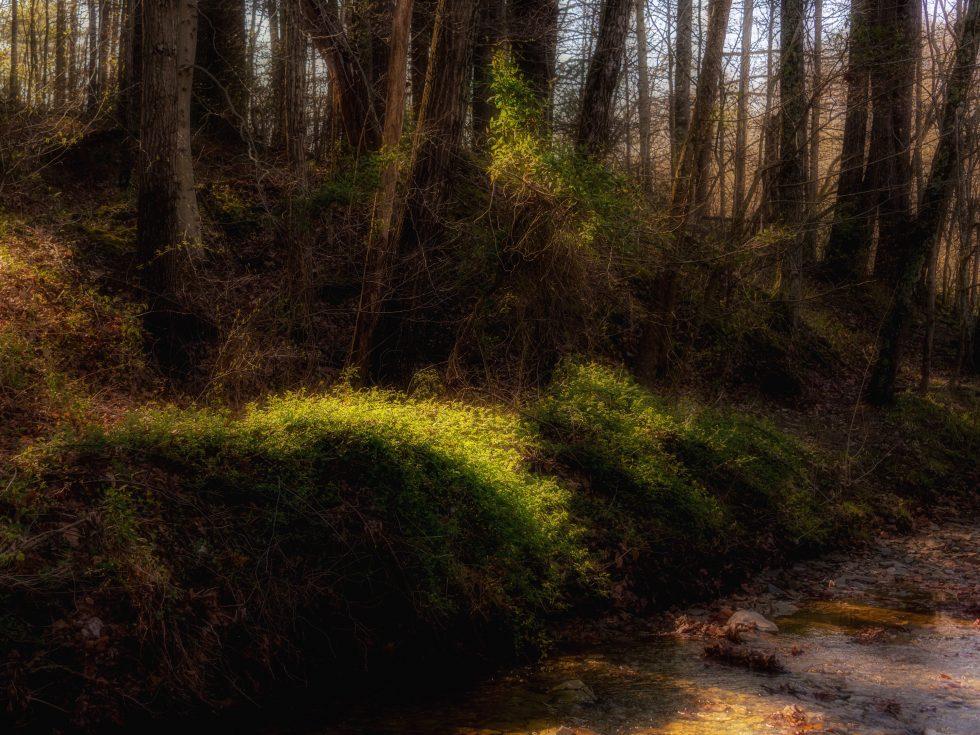 Filtered Forest Light