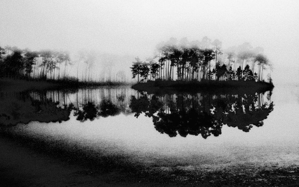 Everglades Foggy Morning
