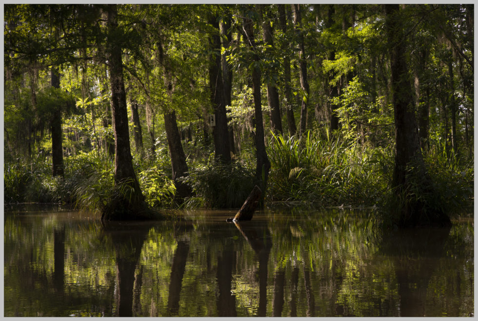 Pearl River Louisiana