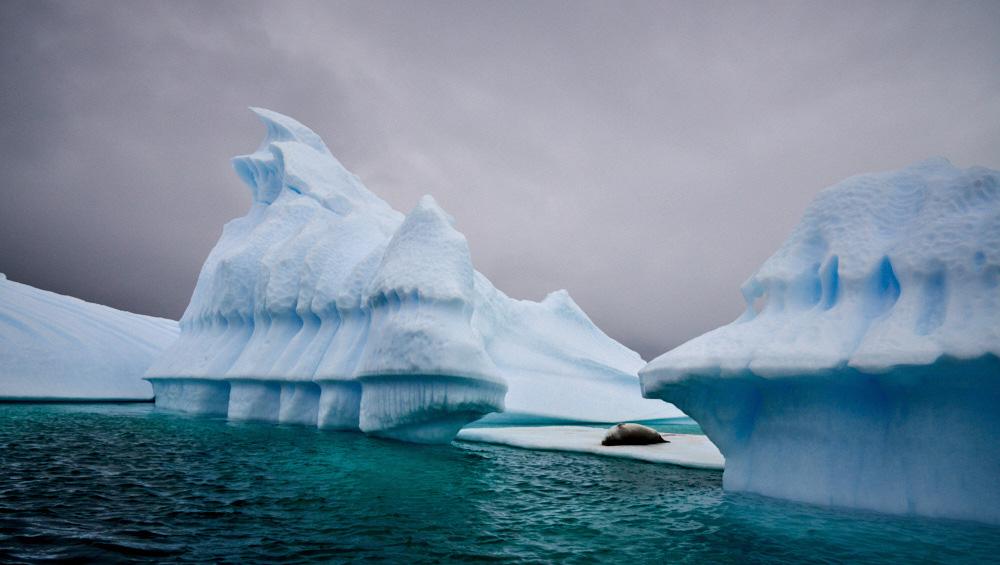 Seal on an iceberg in Pleneau Bay