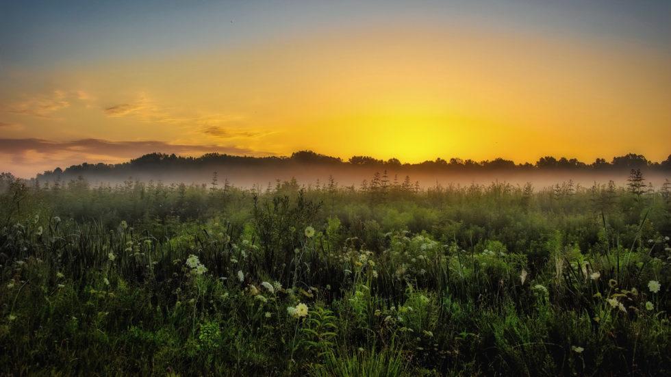 Morning Muscatatuck Mist