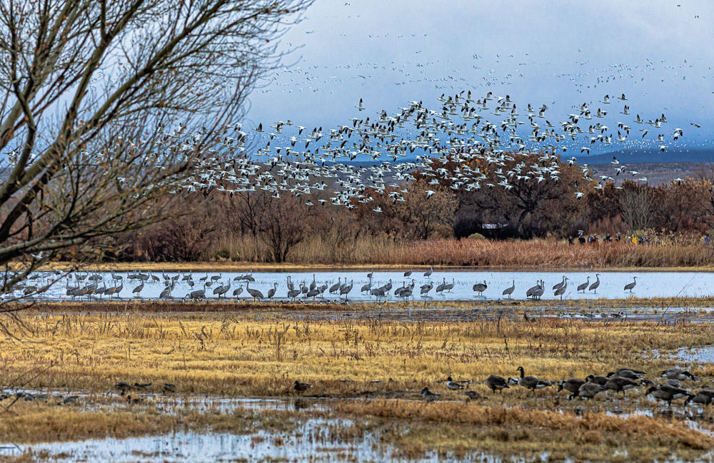 """Bands of Birds (and Photographers)"""