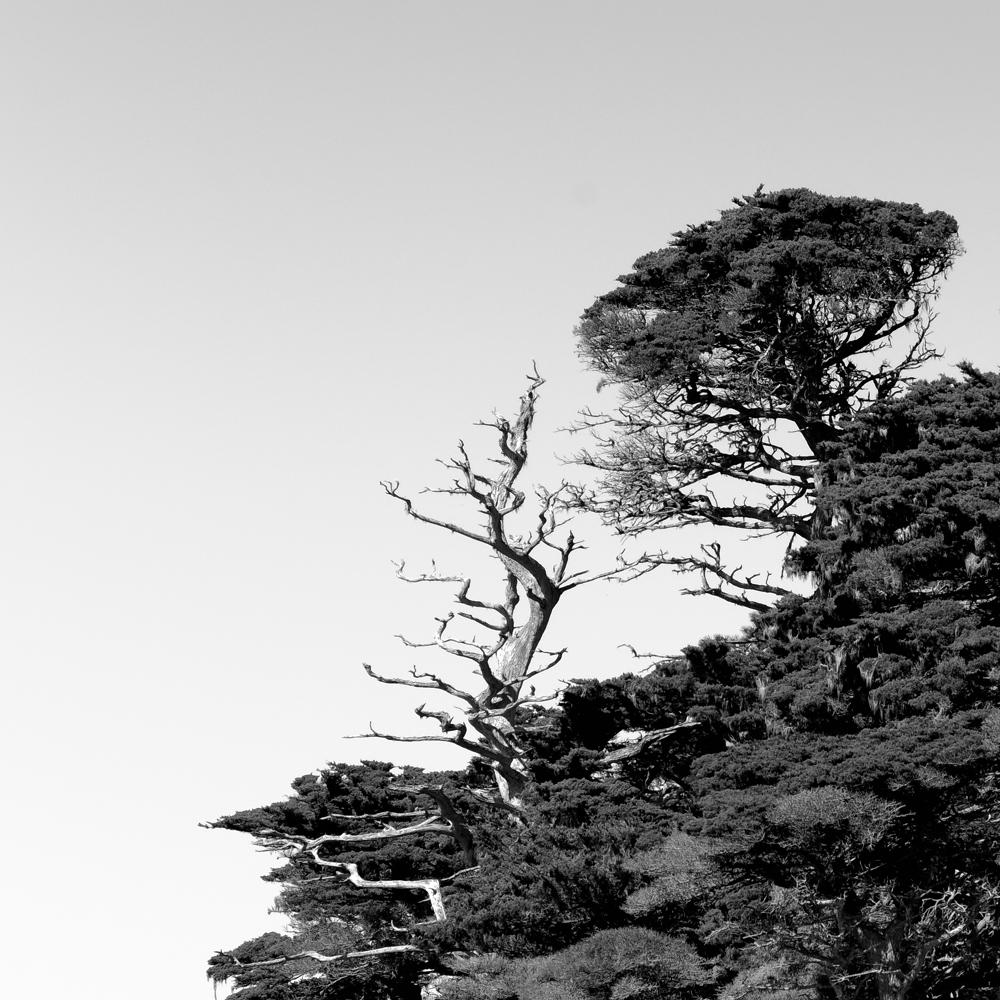 Point Lobos Hillside