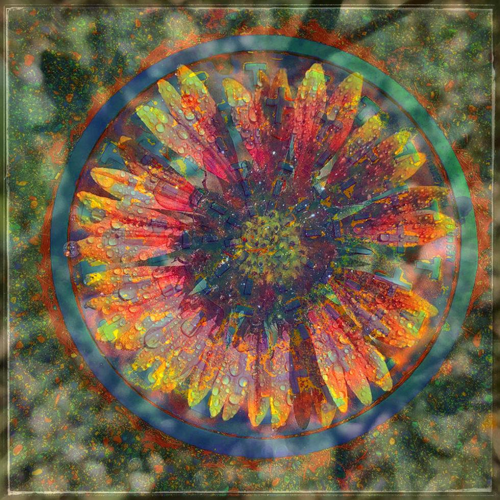 A New Allegory: Blanket Flower