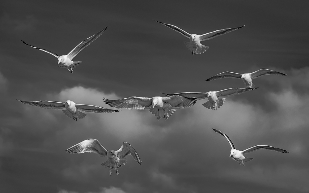 Seagulls in Formation, Cannon Beach, OR