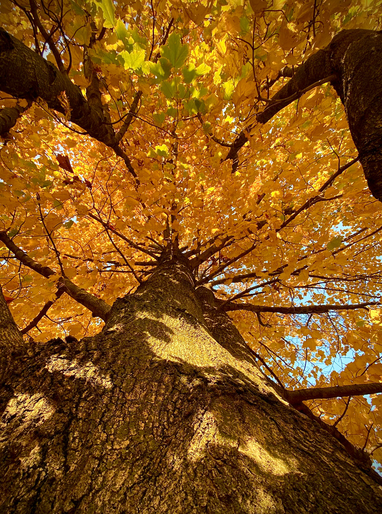 I always say look up and around you when photographing. I did lookup for a couple of tree shots