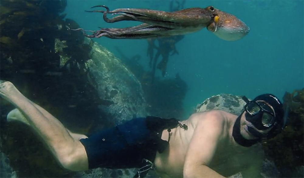 Scene from My Octopus Teacher