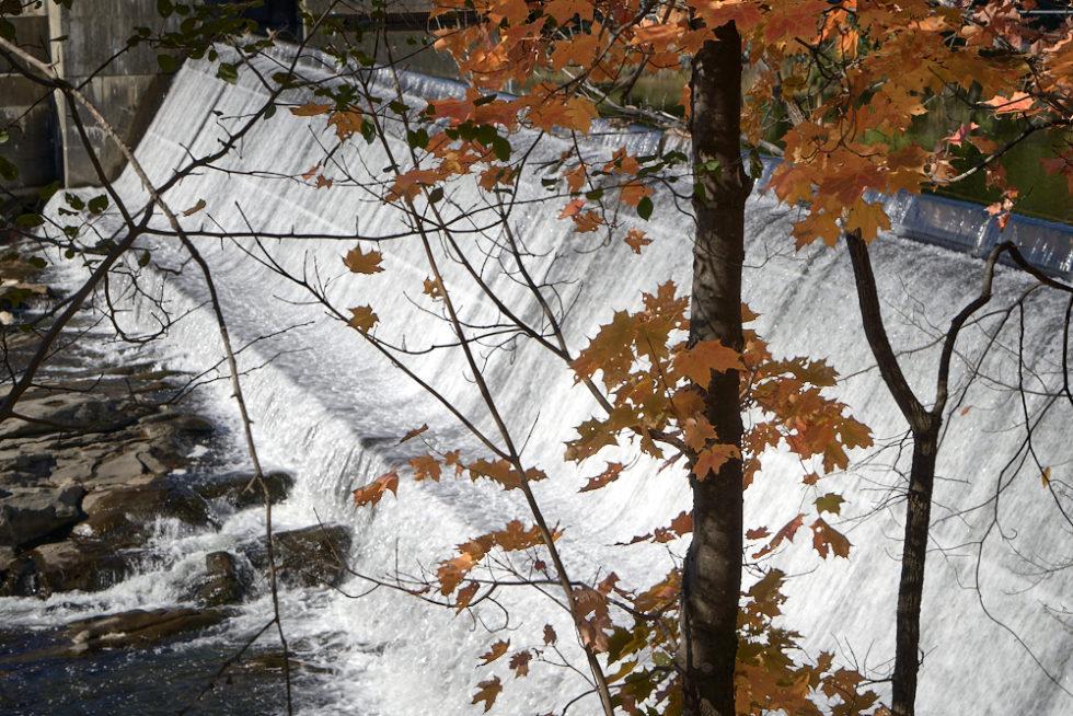 Dam and Tree