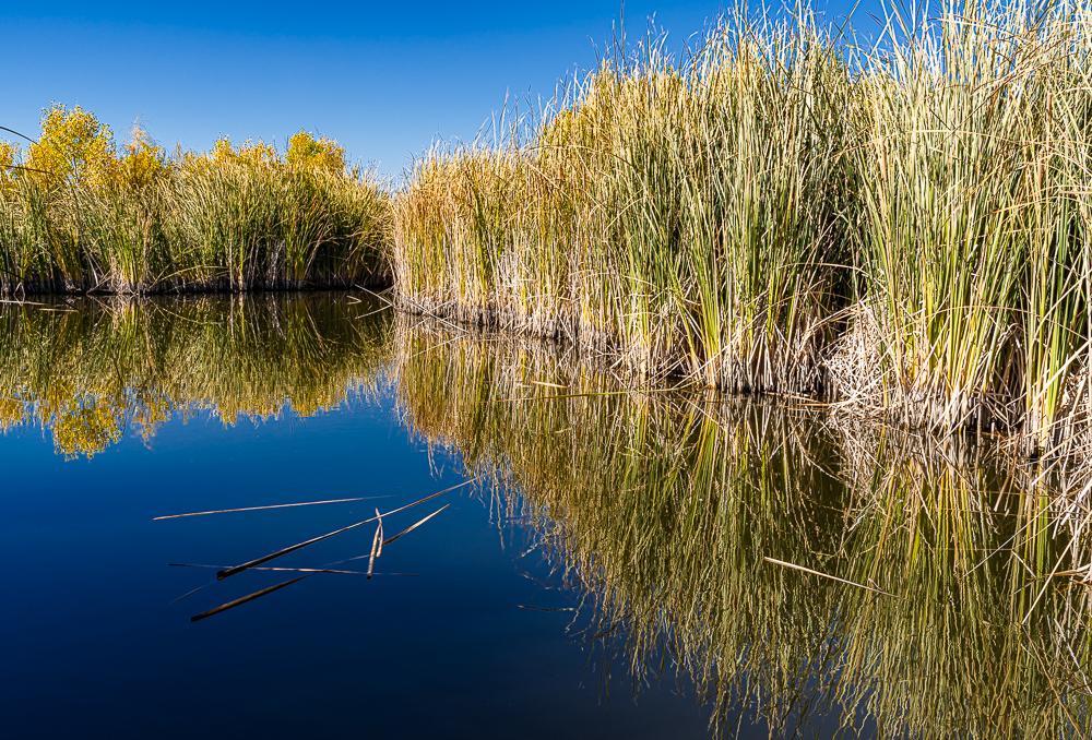 The Wetlands 1