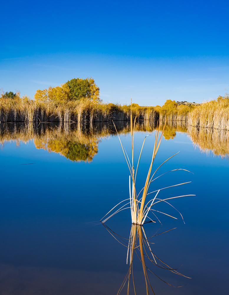 The Wetlands 2