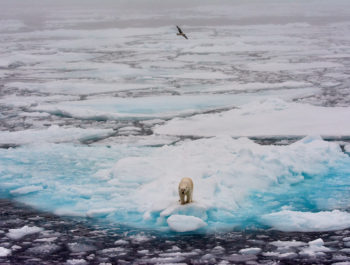 Behind The Shot – Polar Bear On Iceberg