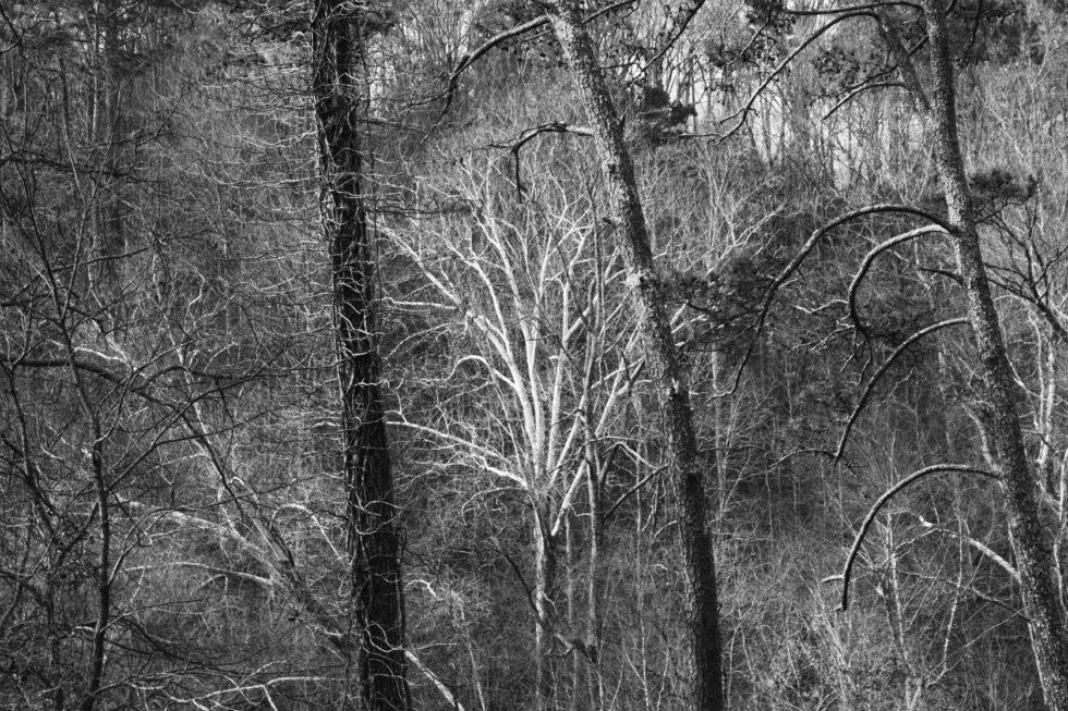 Deepinthe untamedforest