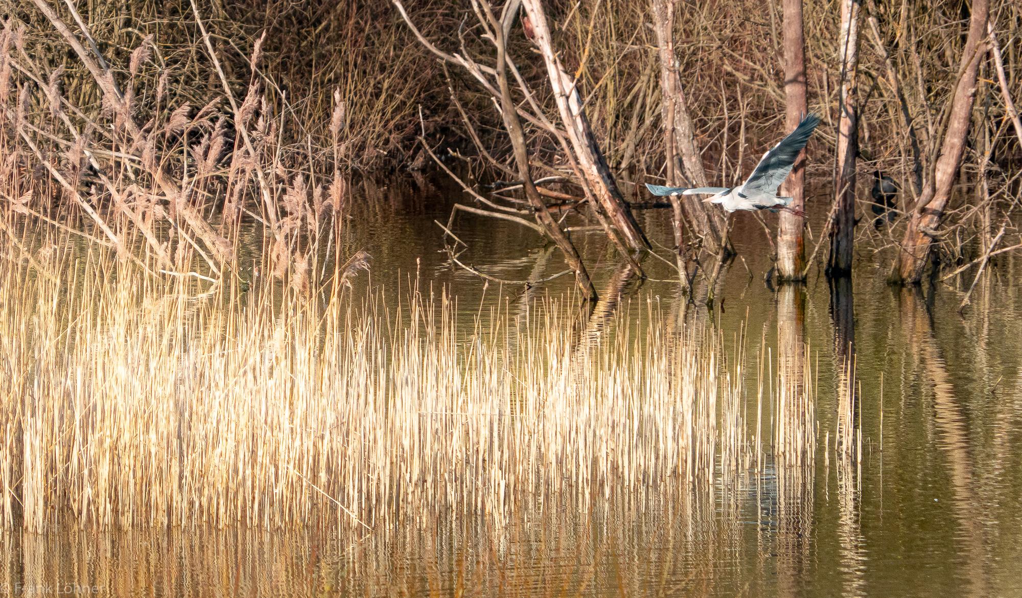 Floating-Heron