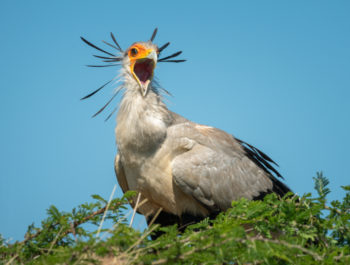 How I Photograph Birds
