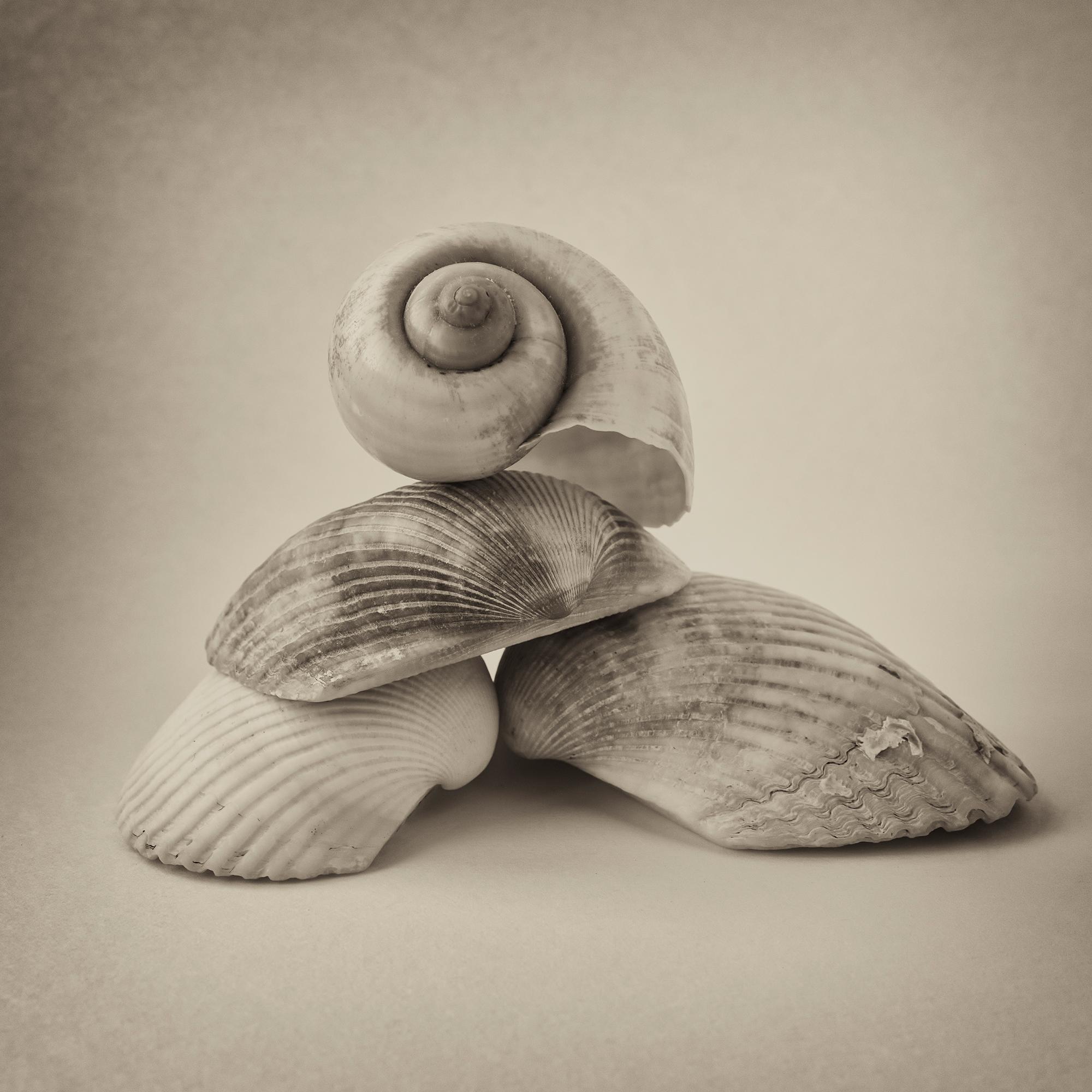'I Hear The Sea'
