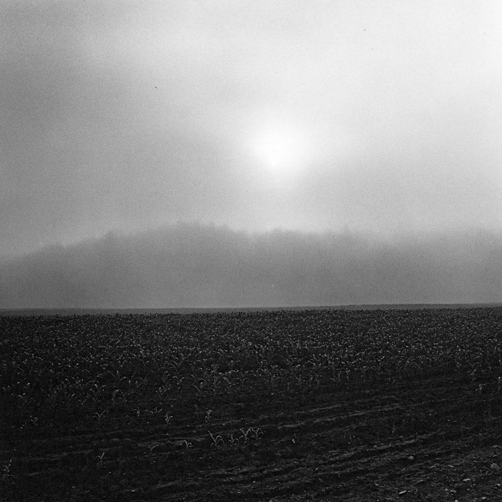 Fog and Field, Vermont
