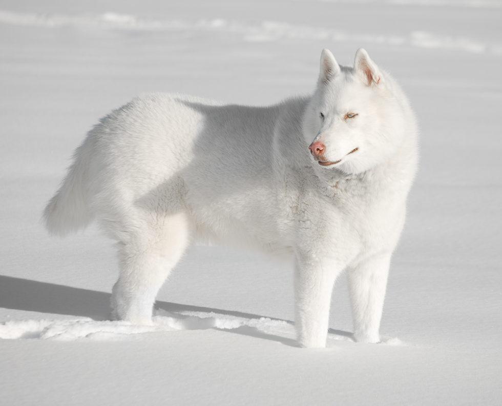 Zia in snow
