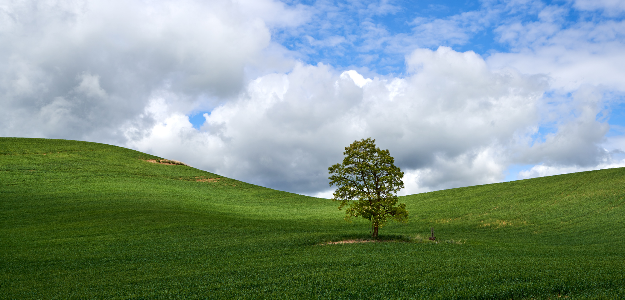 Another lone tree. The lone tree is symbolic of the Palouse.