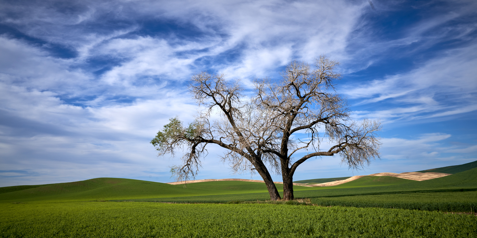One of the more popular lone trees