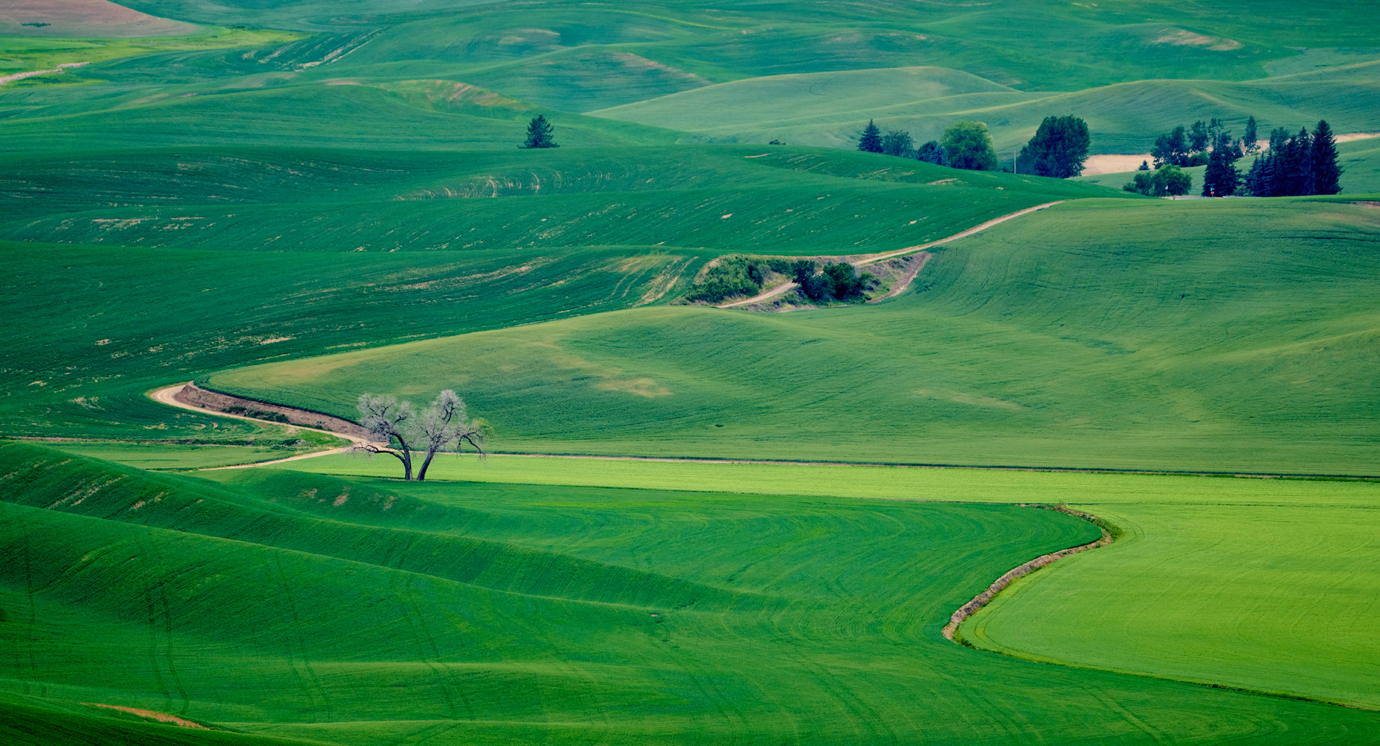 The Lone Tree from above from Steptoe Butte