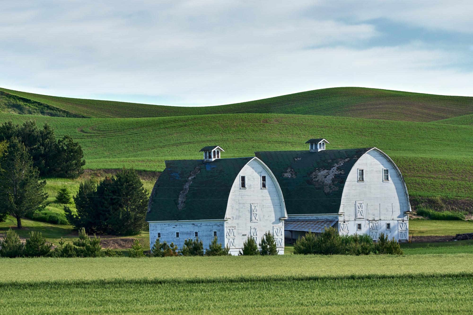 Twin White Barns