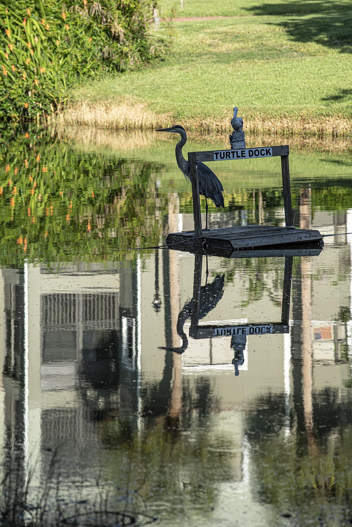 George-on-the-Turtle-Dock