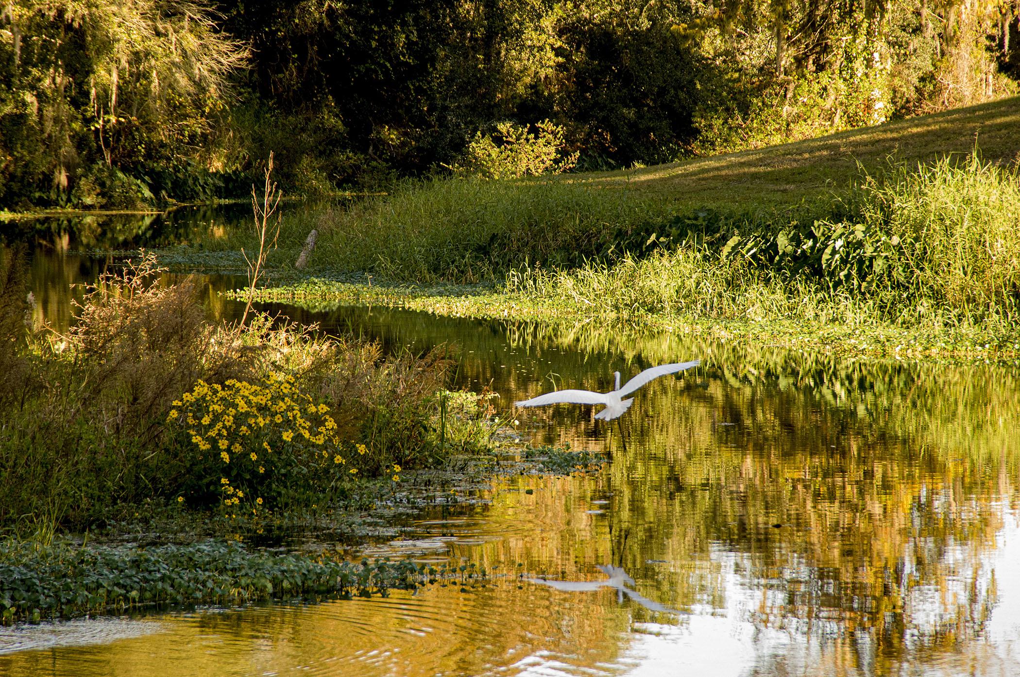 Egret-at-Sunrise