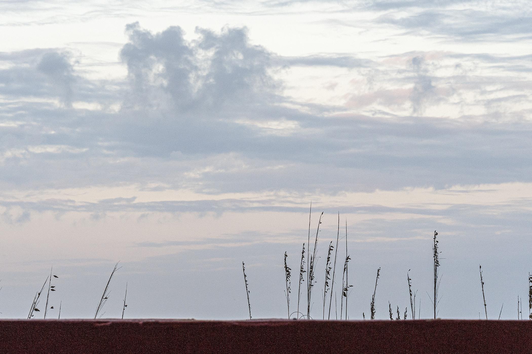 Grass-ans-Sky