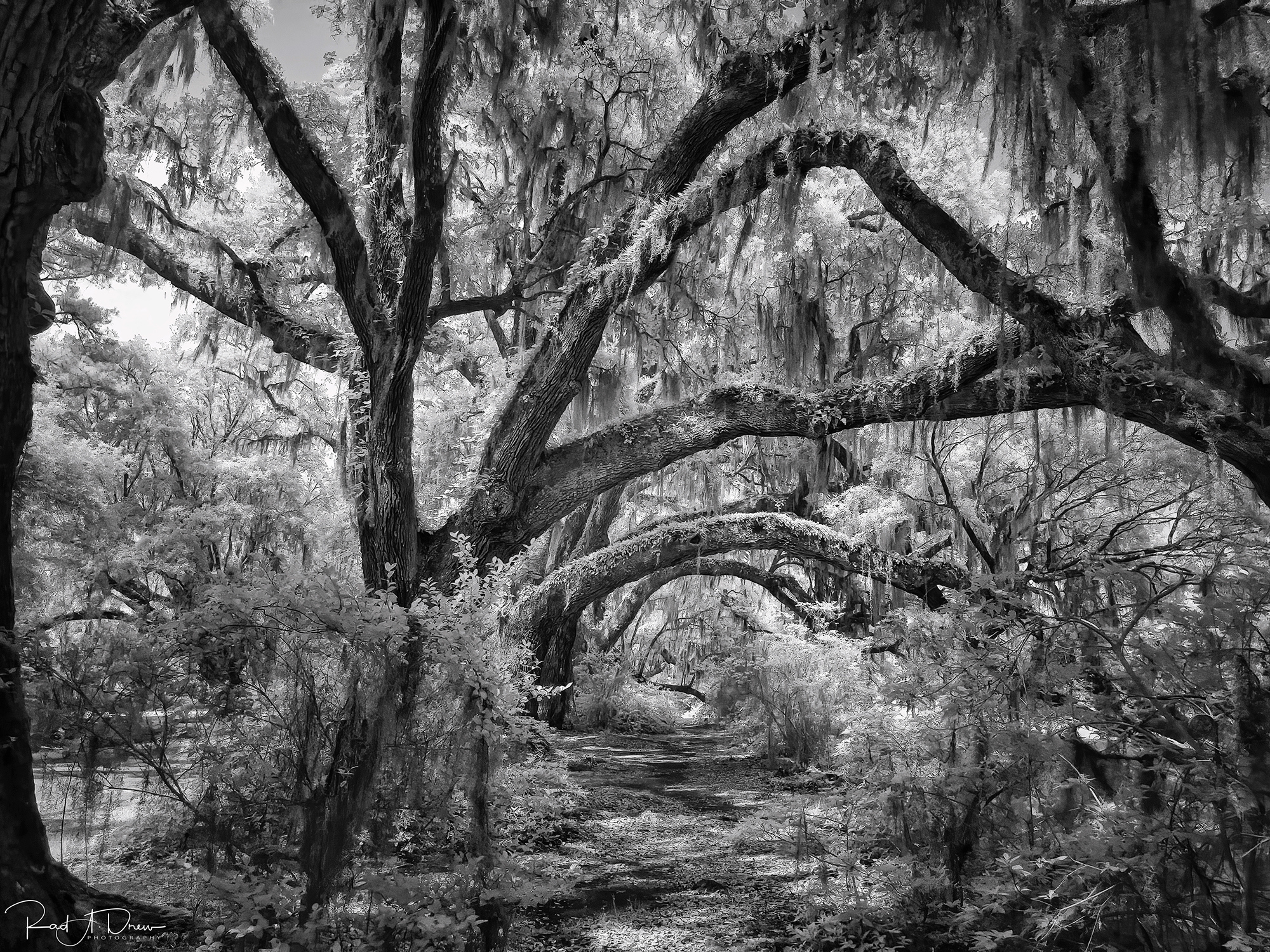 Created with the iPhone 12 Pro Max, Native Camera, ProRAW and Night Mode, processed on the desktop in Luminar 4 with plugins Topaz DeNoise AI, Sharpen AI, and Nik Silver Efex Pro 2