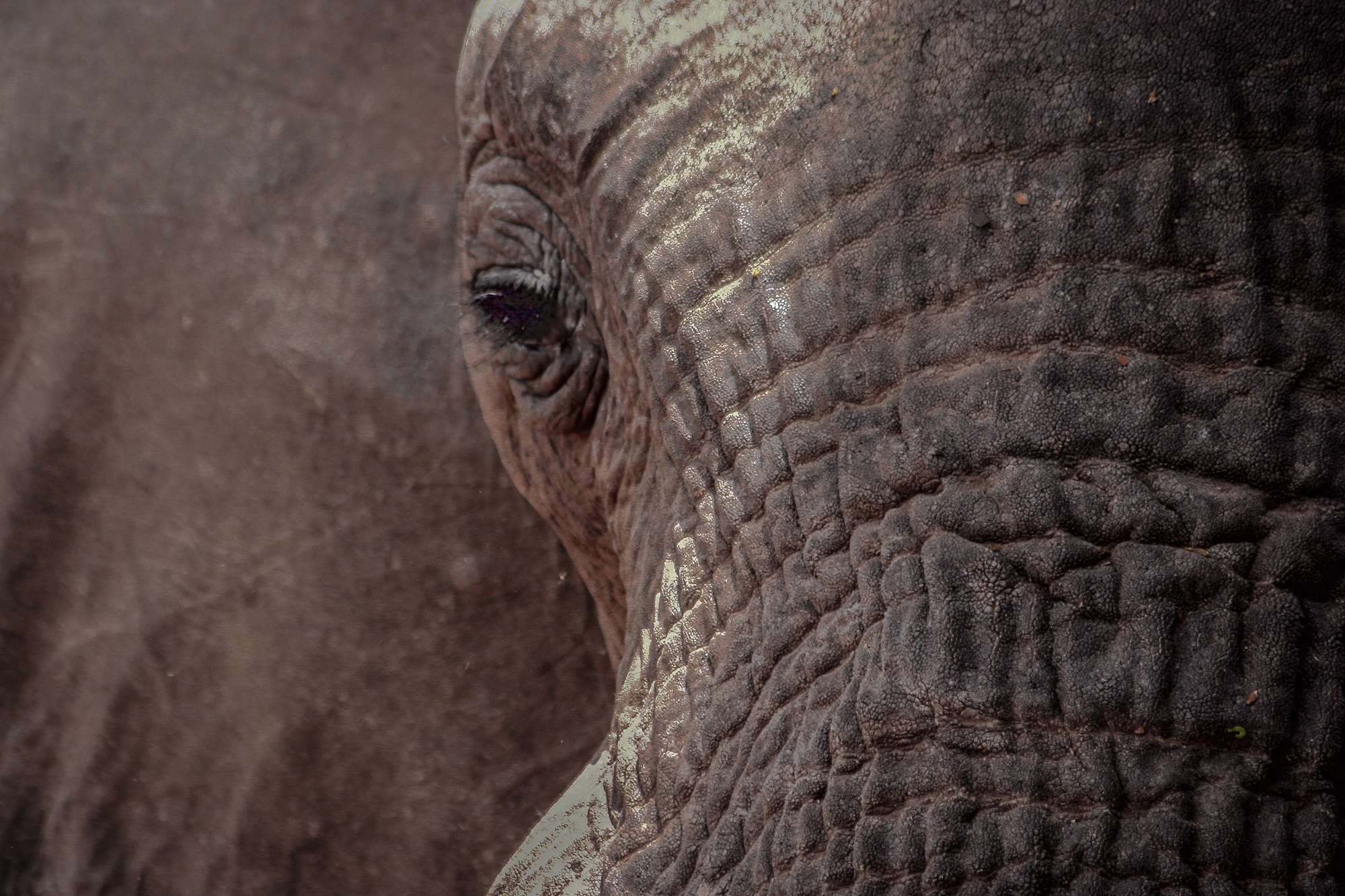 A different way of looking at an elephant