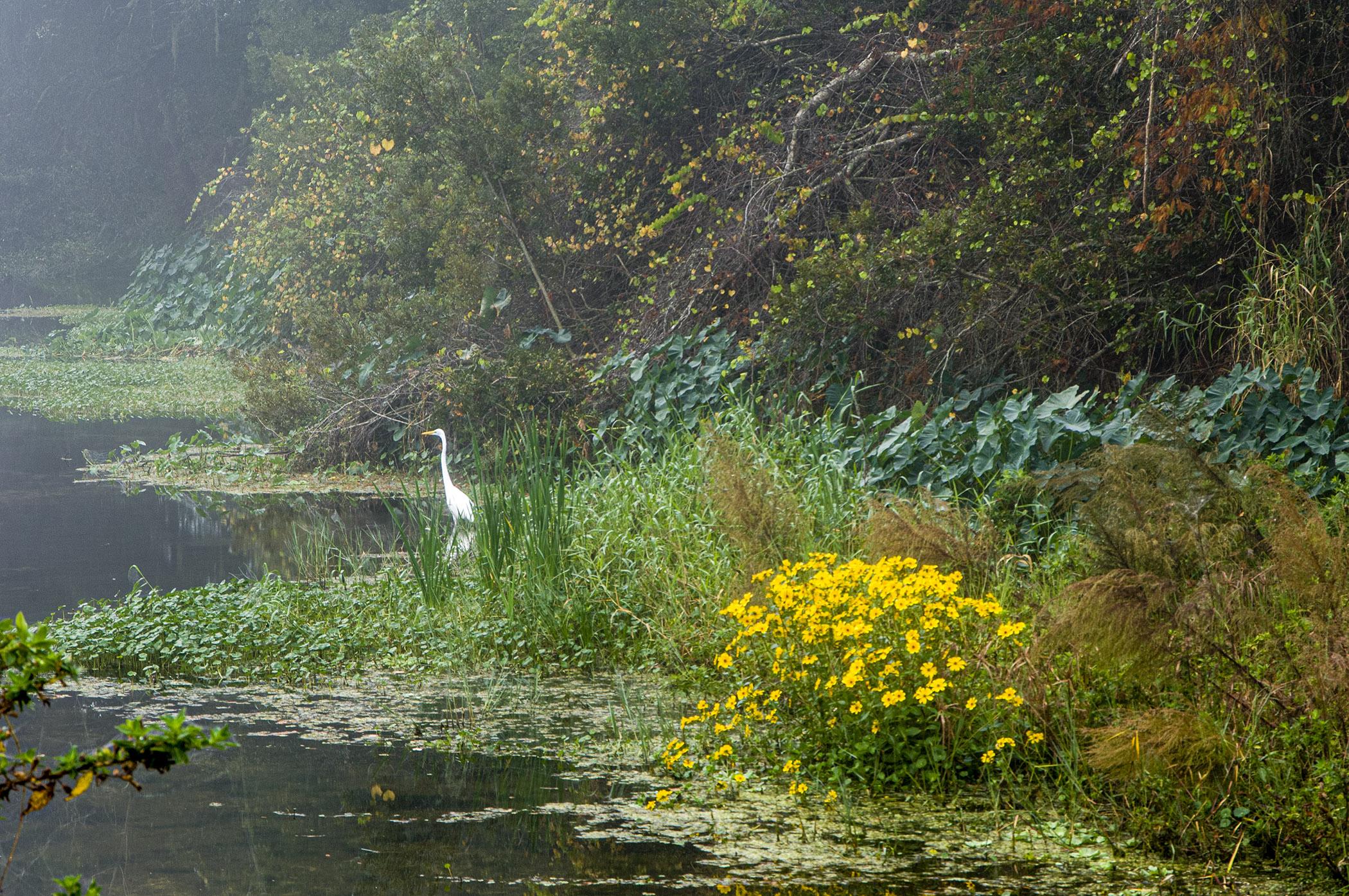 Egret-and-Fog